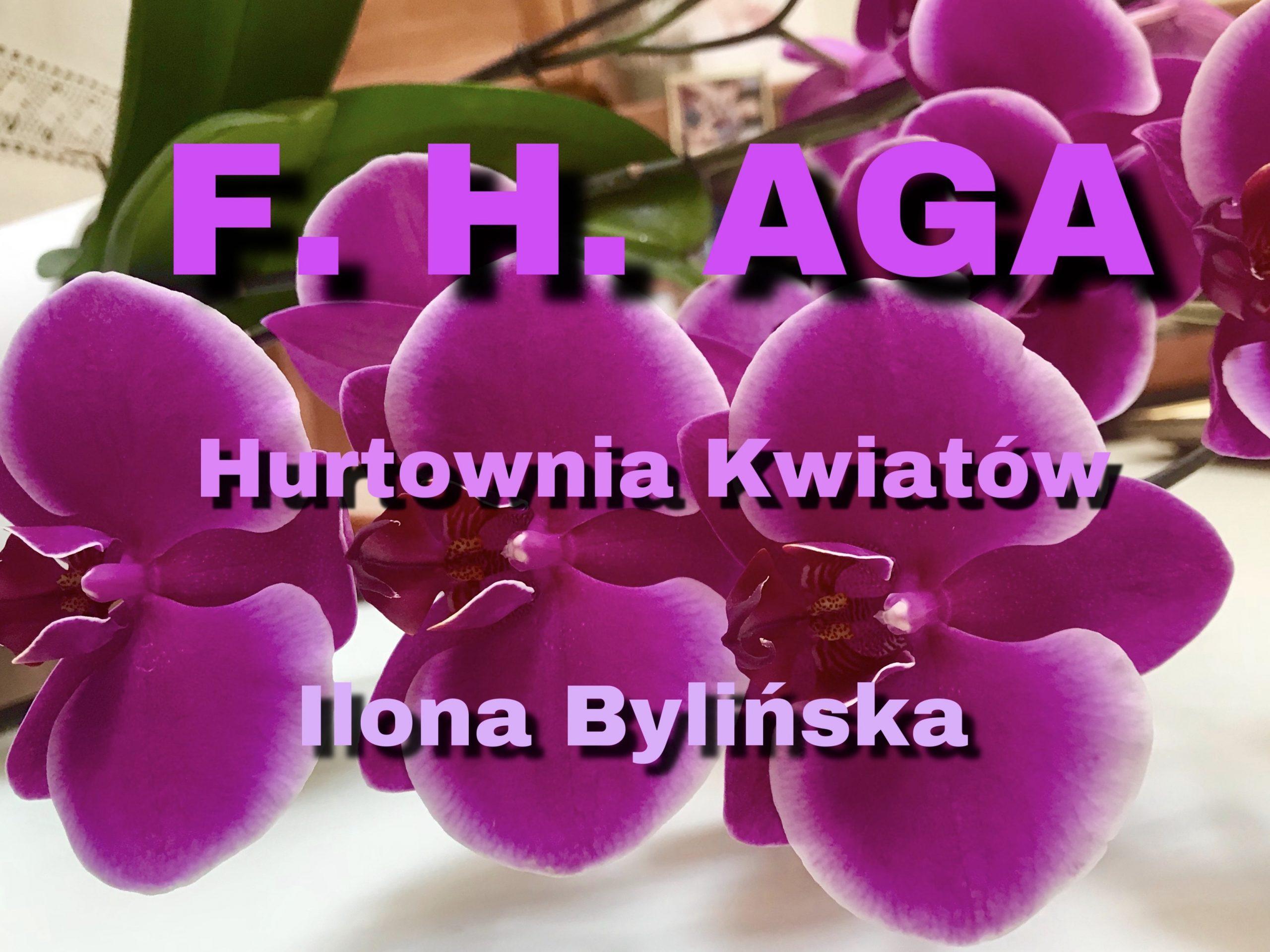 Kwiaty Aga